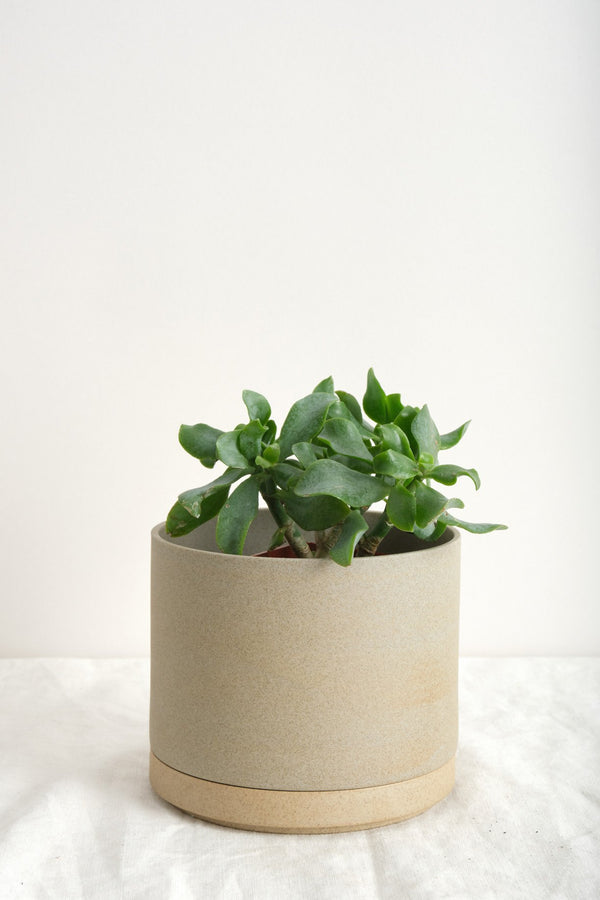Hasami Porcelain Large Planter In Natural