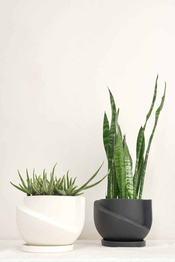 Light + Ladder small vayu planter