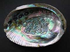Large Green Abalone Smudge Shell & Incense Burner | PPO