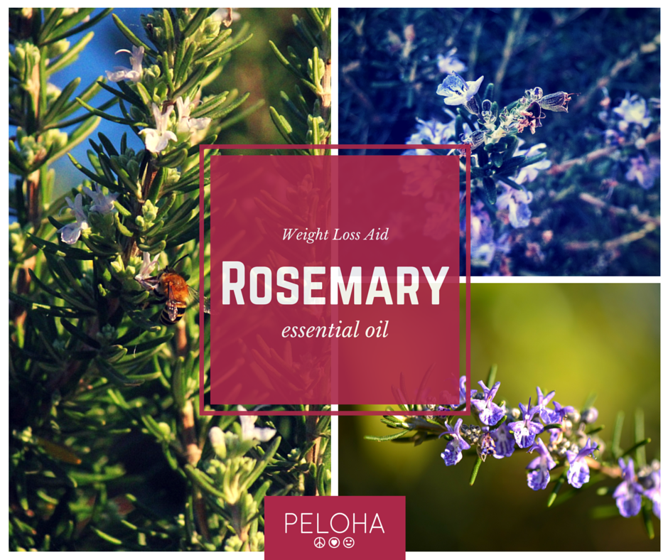 rosemary essential oil weight loss aid