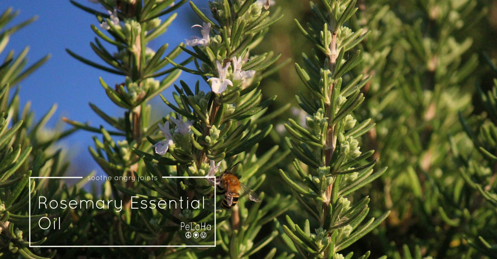 rosemary essential oil is a strong oil that soothes joint pains