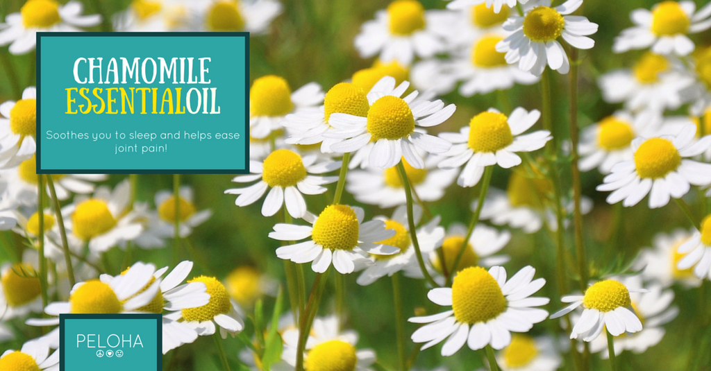 roman chamomile helps you sleep as well as eases joint discomfort
