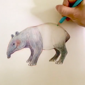 Draw your first Tapir.