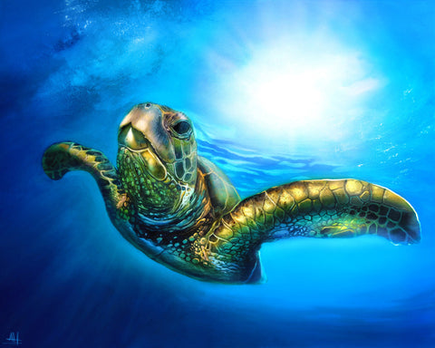 "Ashton Howard "" Sea Turtle "" Size : 12"" by 16"" - Limited ""150"" Edition Giclee Canvas - Art Center Gallery"