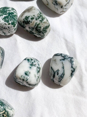 Tree Agate Tumbles | Medium - Unearthed Crystals