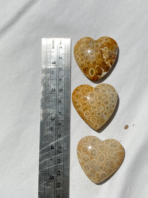 Fossil Coral Heart | Large - Unearthed Crystals