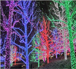 He Used Red 5mm Wide Angle Lens To Create This Awesome Tree Display Link To  These Lights Red 45602