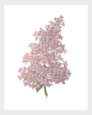 Lilac Print Vintage French Botanical Print Digital Download