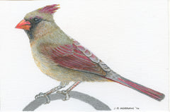 Colored Pencil: Birds