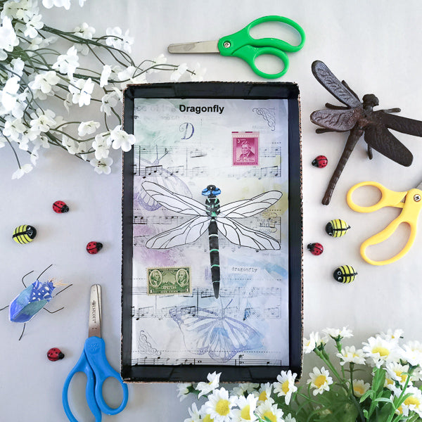 Insect Shadowbox | Family