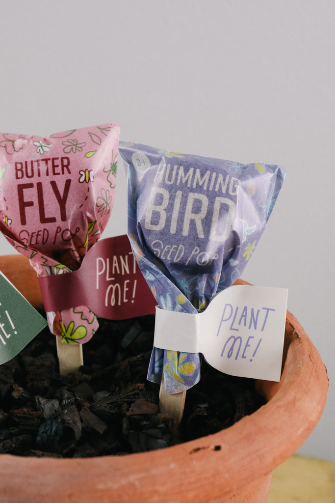 Seed Lollipops