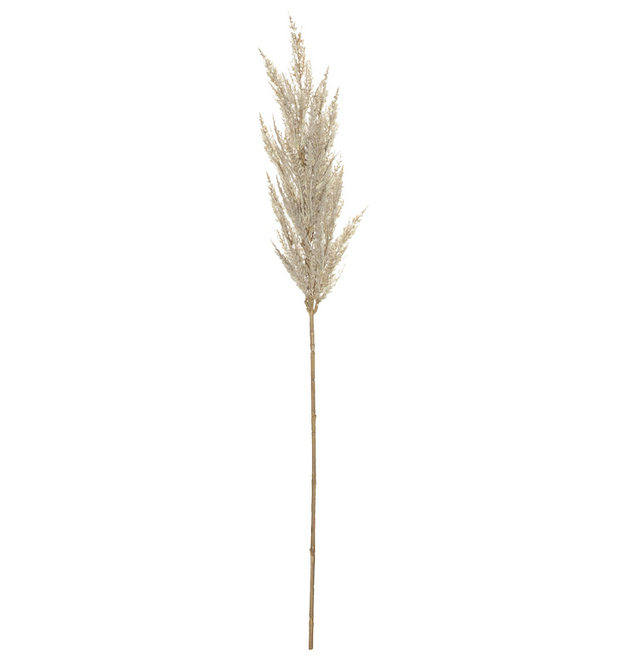 Pampas grass spray cream