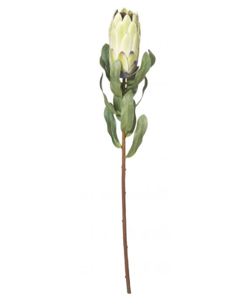 Protea Stem Light Green