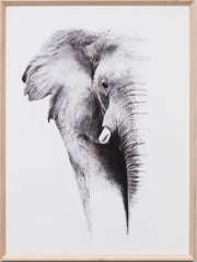 African Elephant framed print -FREE LOCAL DELIVERY AVAILABLE