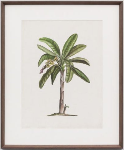 British palms 2 framed print