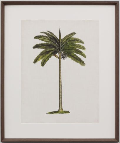 British palm 4 framed print- SHIP DIRECT OR LOCAL CLICK AND COLLECT