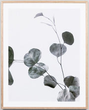 Eucalyptus branch 1 and 2 framed print