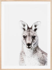 Eastern grey portrait kangaroo framed print