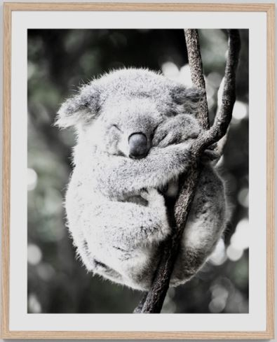 Koala Friend: Bushfire Appeal Edition