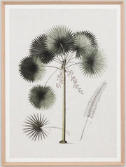 Vintage fan palm print- FREE LOCAL DELIVERY AVAILABLE