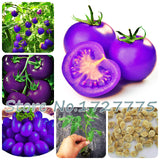 A Pack 100 Pcs Purple Cherry Tomatoes  Balcony Fruits  Vegetables Potted Bonsai Potted Plant Tomato - thefashionique