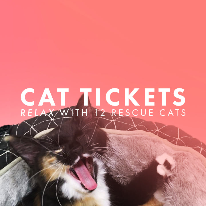 TICKET - Cat Lounge