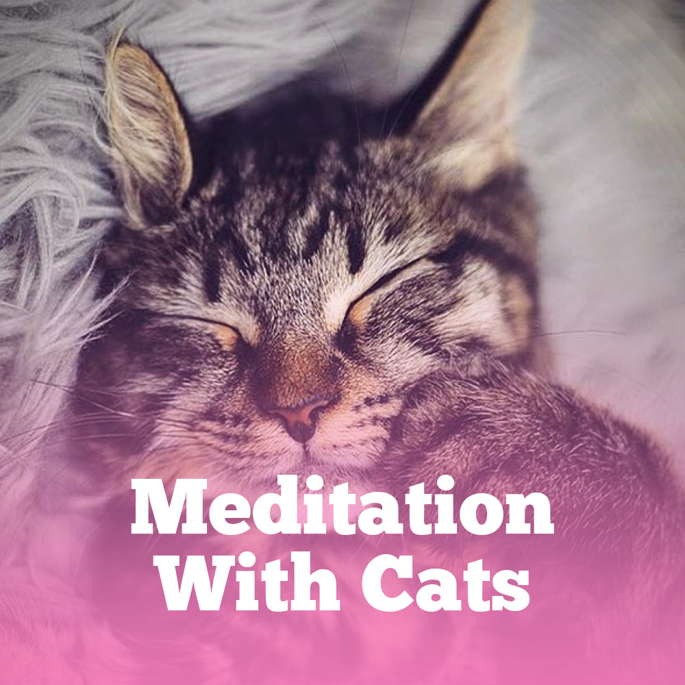 Meditation with Cats