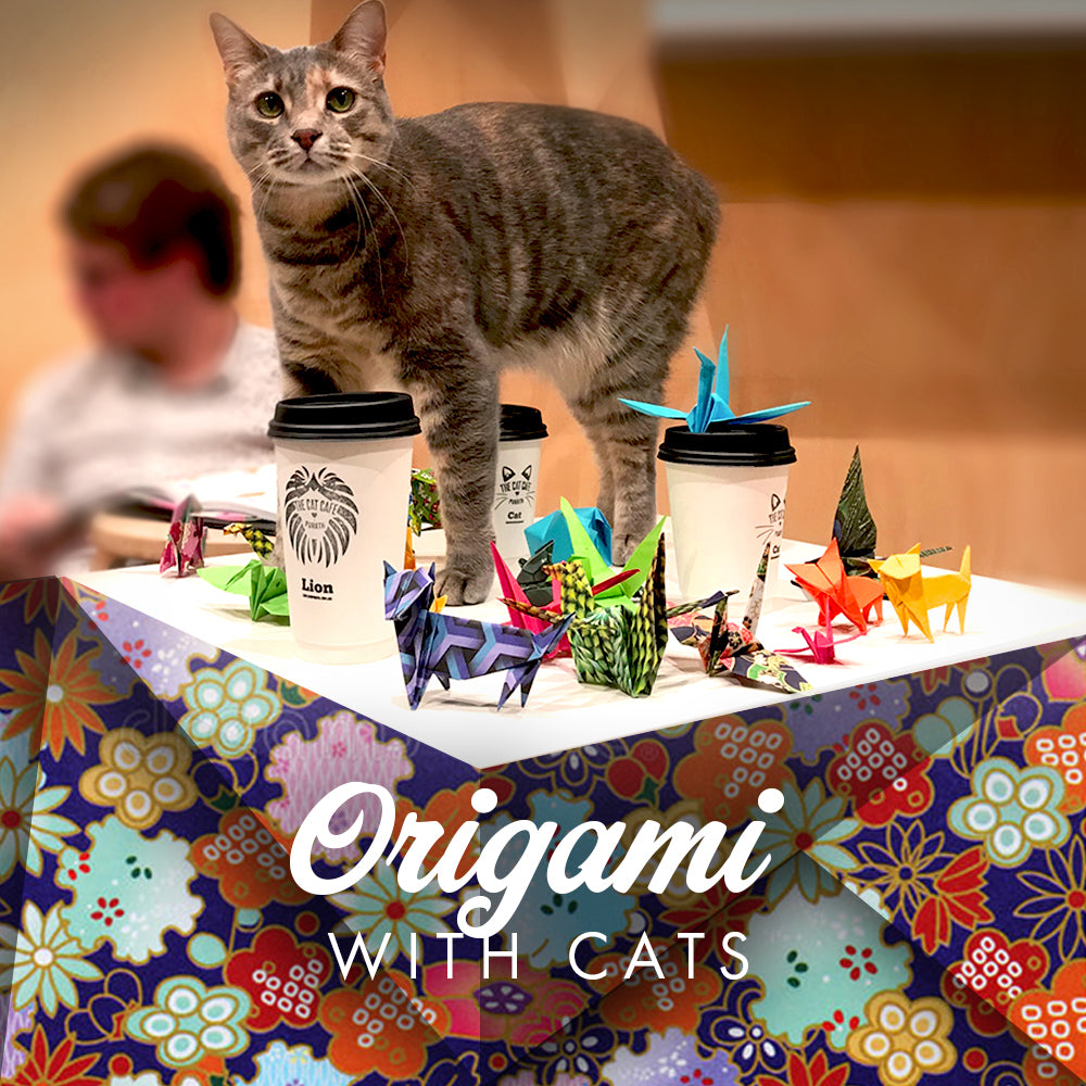 Origami with Cats