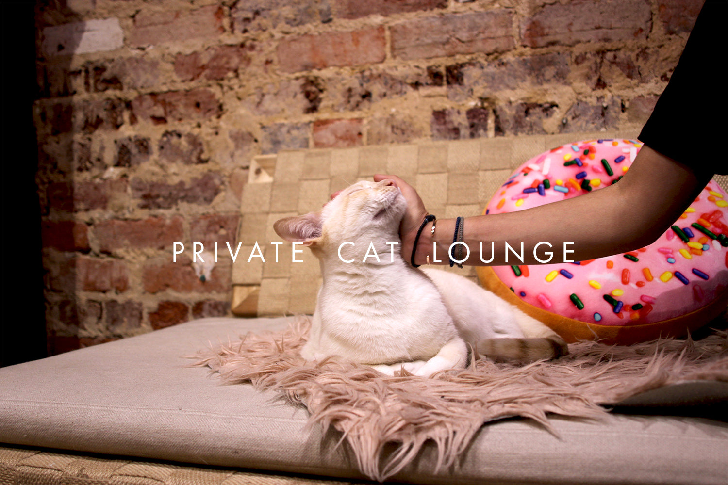 Exclusive Cat Lounge Bookings