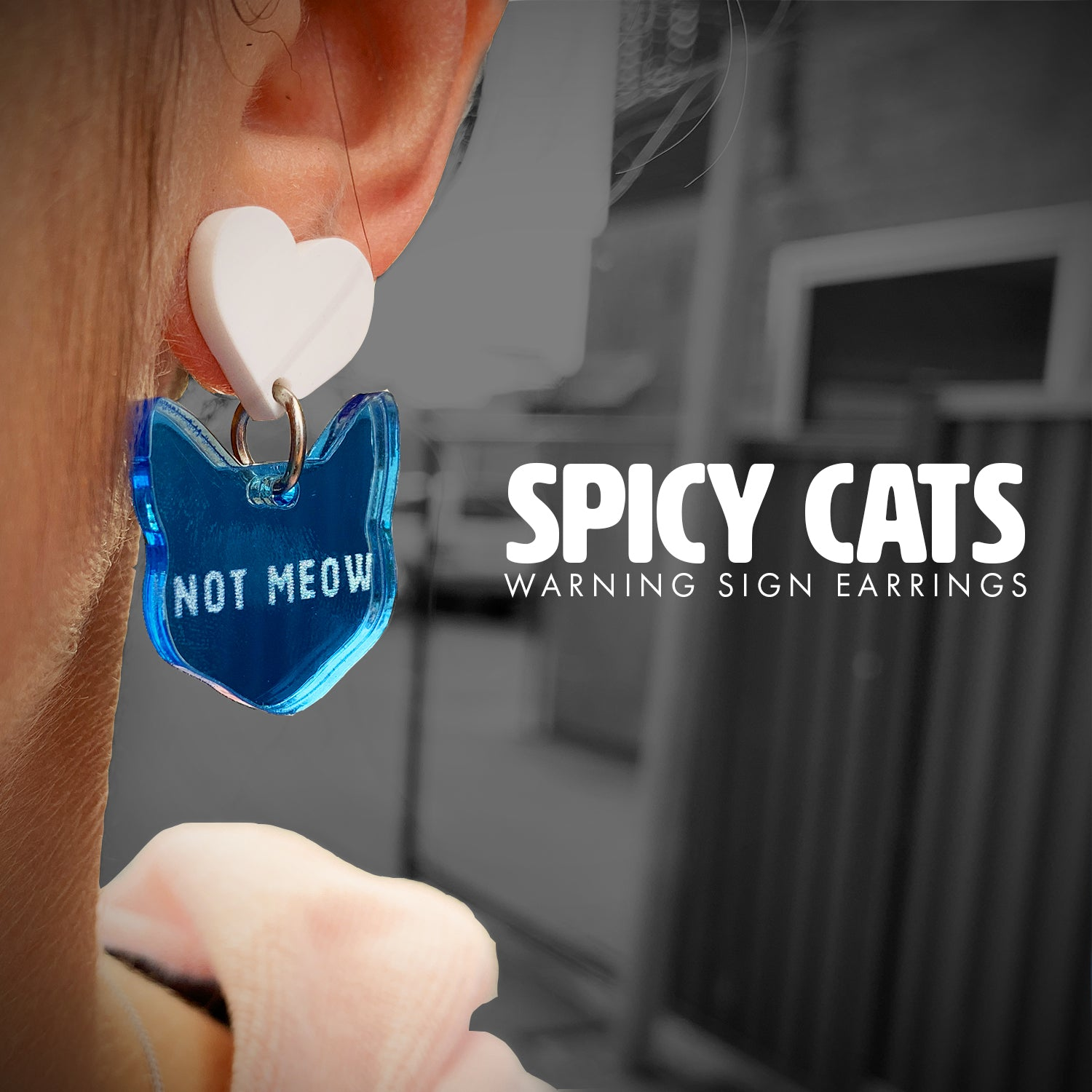 Spicy Cats - Warning Signs