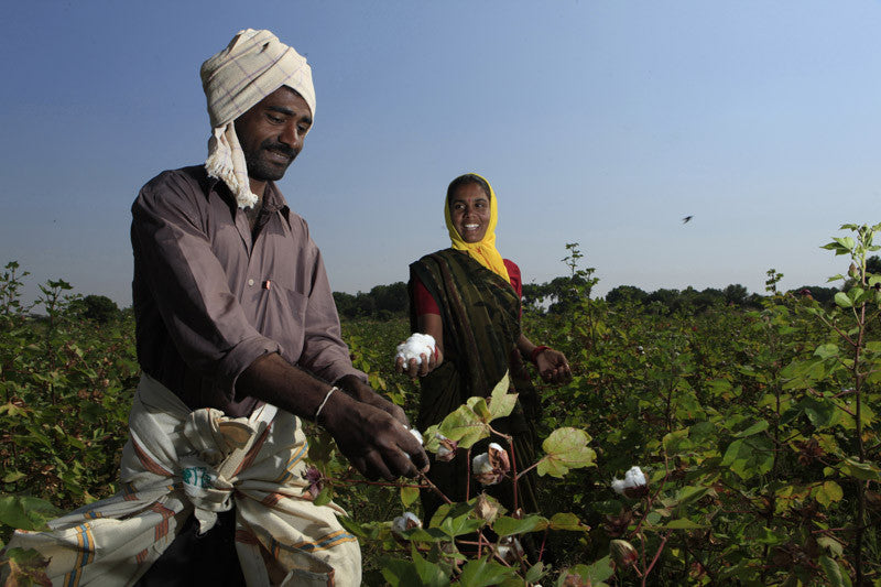Fairtrade Cotton farming