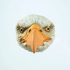 Wall-Hanging Cement Animal Head | Eagle