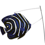 Swimming Fish - Angelfish