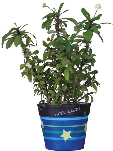 Flower Pot Cover - Good Luck