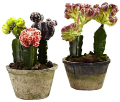 4843-S2 Colorful Cactus Set of 2 Faux Plants by Nearly Natural | 9.5 & 10""