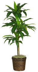 6585-0308 Dracaena Artificial Tree with Planter by Nearly Natural | 4 feet