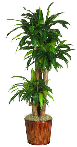 6584-0508 Dracaena Silk Tree with Bamboo Planter by Nearly Natural | 62 inches