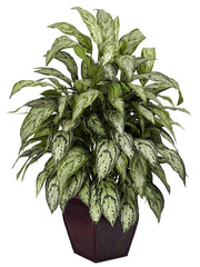 6693 Chinese Evergreen Silver Queen Silk Plant by Nearly Natural | 38""