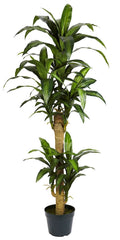 6100 Yucca Artificial Silk Tree with Planter by Nearly Natural | 5 feet