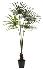 5447 Fan Palm Indoor Outdoor Silk Tree with Planter by Nearly Natural | 84""