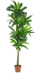 6596 Dracaena Artificial Silk Tree with Planter by Nearly Natural | 6 feet