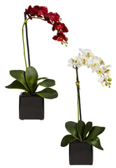 4757-S2 Phalaenopsis Silk Orchid Set/2 Plants by Nearly Natural | 20 inches