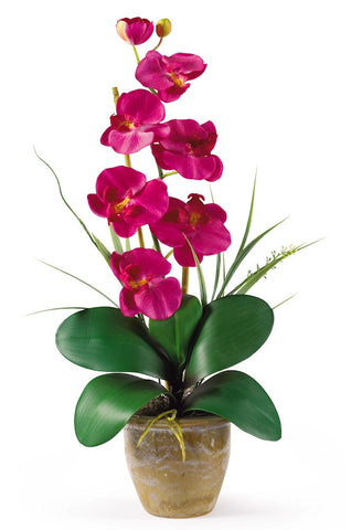 1016-BU Beauty Phalaenopsis Silk Orchid in 8 colors by Nearly Natural | 21 inches