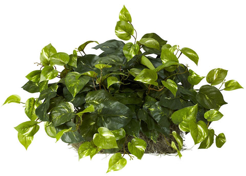 6708 Pothos Artificial Silk Plant Set on Foam by Nearly Natural | 15 inches