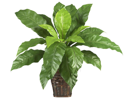 6530 Bird's Nest Fern Silk Plant w/Basket by Nearly Natural | 22 inches