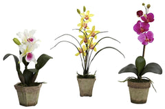 4985-A1-S3 Cattleya Cymbidium Phalaenopsis Orchids A1 S/3 by Nearly Natural | 19""