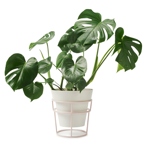 BUNDLE & SAVE!! POTPLANT STAND & LARGE POT