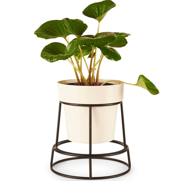 BUNDLE & SAVE!! POTPLANT STAND & MEDIUM POT
