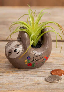 Natural Life Critter Succulent Grey Sloth - Global Free Style