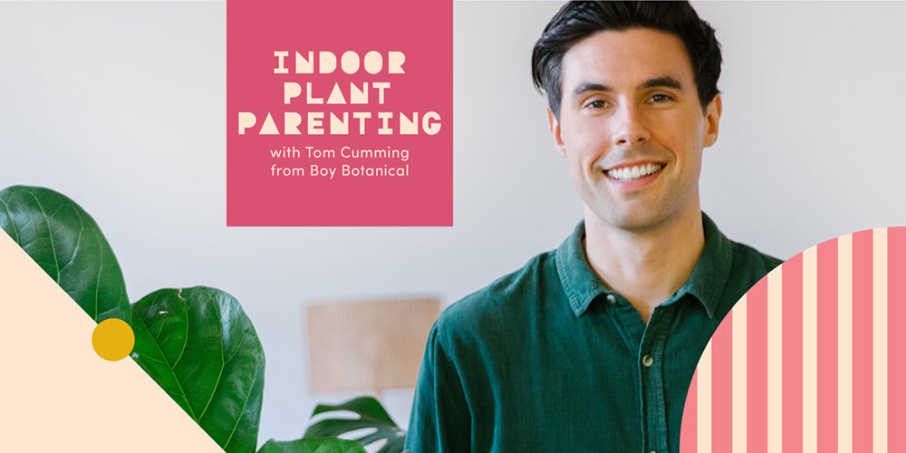 Indoor Plant Parenting with Tom Cumming from Boy Botanical